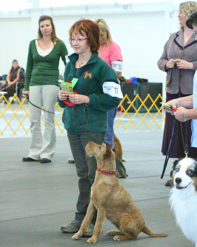 Irish Terrier Mocha in Obedience Trial