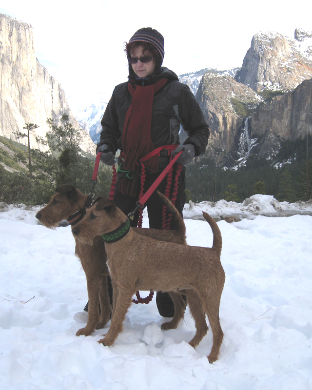 Irish Terriers Druid and Mocha, Yosemite Valley, California