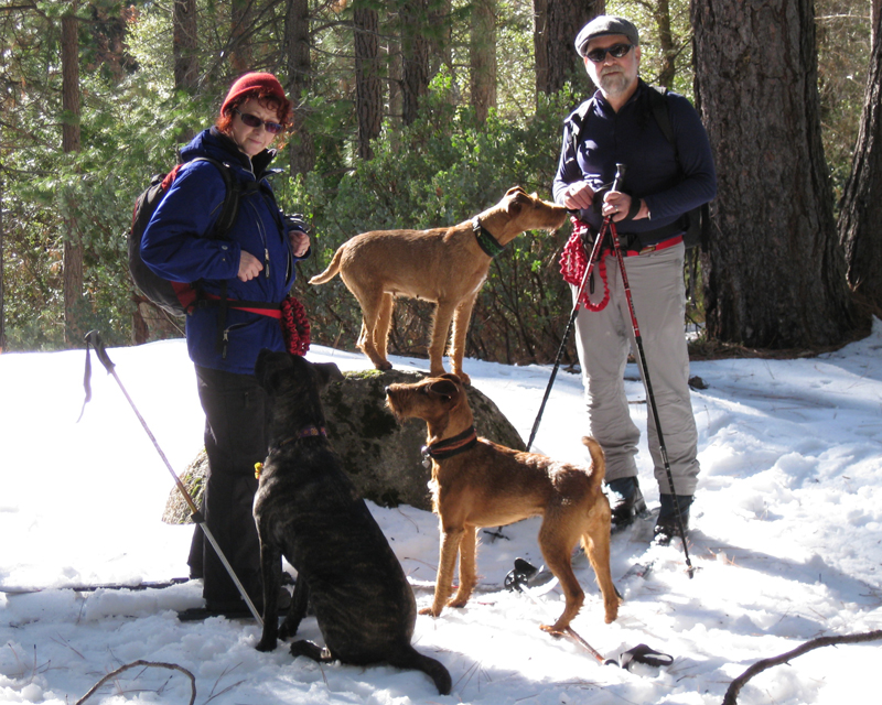 Irish Terriers Druid and Mocha, Sierra National Forest, California
