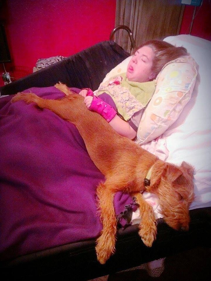 Irish Terrier Murphy and His Friend Emma