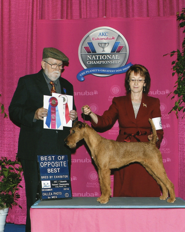 Irish Terrier Ayfa, Eukanuba, 2010