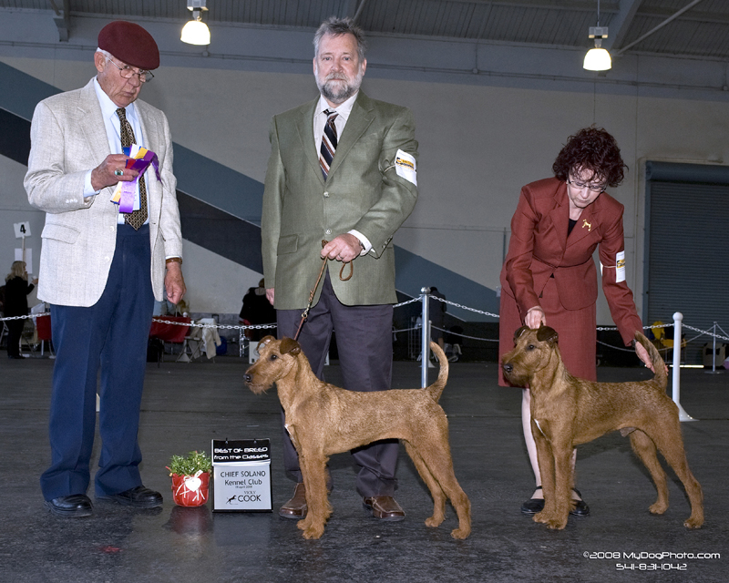 Irish Terriers Ayfa and Druid, Chief Solano Kennel Club 2008
