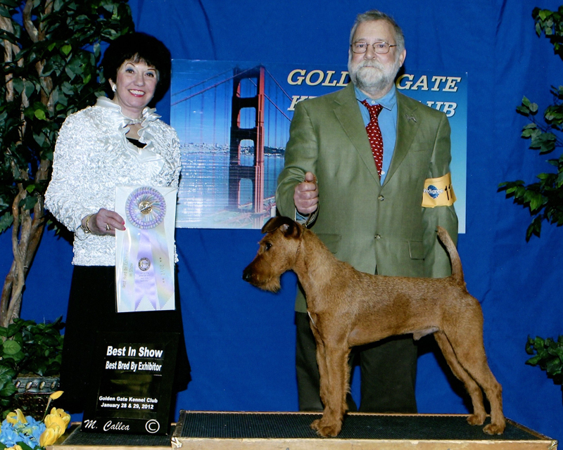 Irish Terrier Bullet Best in Show Bred By Exhibitor