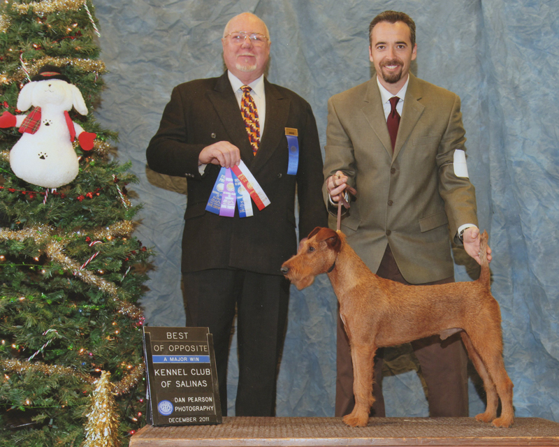 Irish Terrier Bullet, Kennel Club of Salinas, 2011
