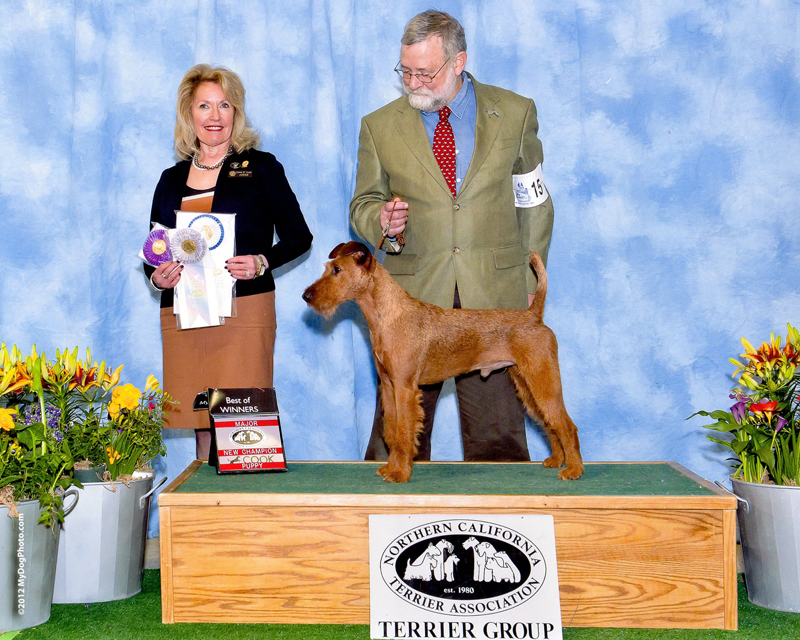 Irish Terrier Bullet, Northern California Terrier Association, 2011