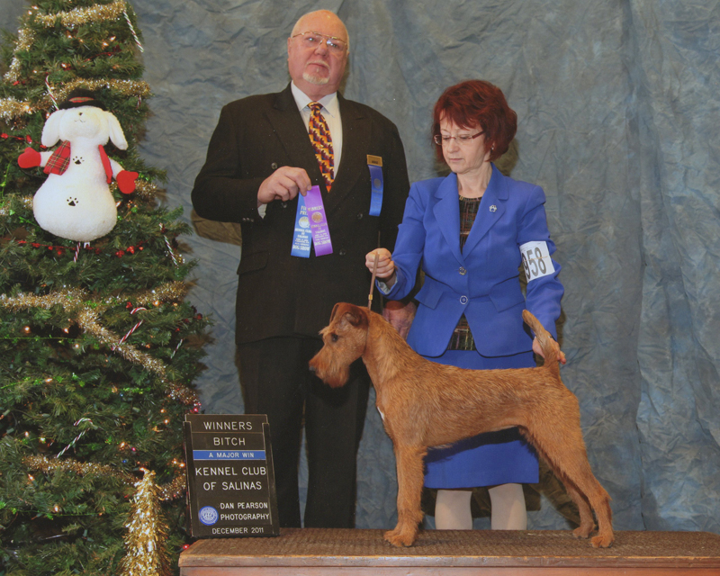 Irish Terrier Daragan, Kennel Club of Salinas, 2011