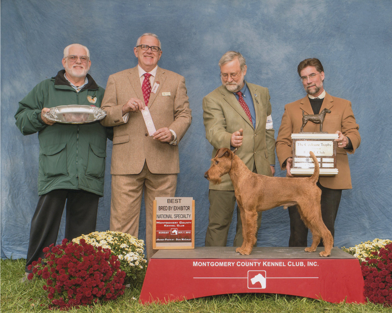 Irish Terrier d'Artagnan, Montgomery County Kennel Club, 2012