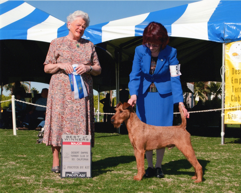 Irish Terrier d'Artagnan, Desert Empire Terrier Club of Southern California, 2012