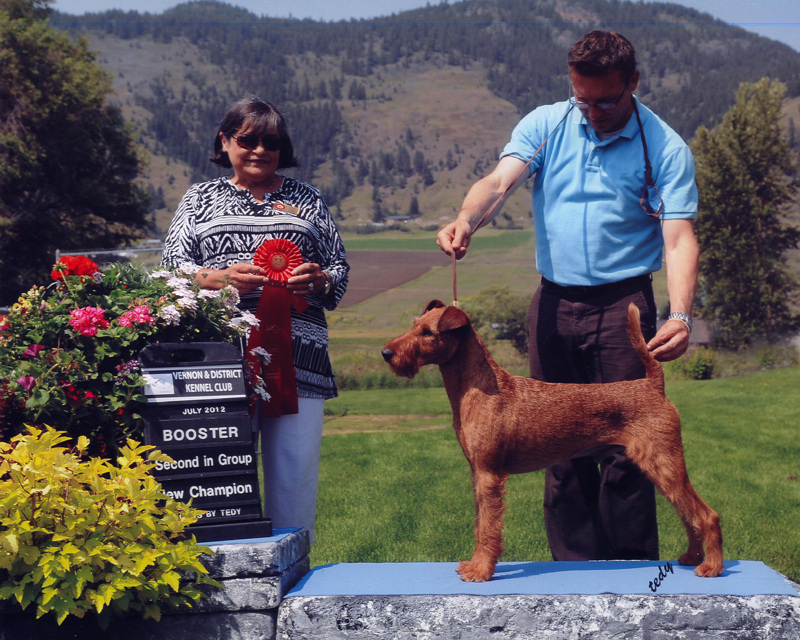 Irish Terrier d'Artagnan, Vernon and District Kennel Club, 2012