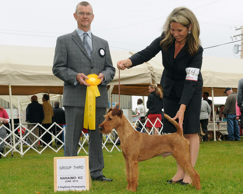 Irish Terrier d'Artagnan, Nanaimo Kennel Club, 2012