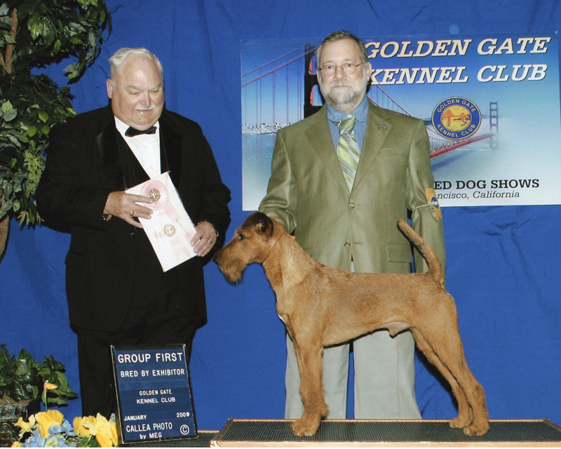 Irish Terrier Druid, Group 1 Bred by Exhibitor, Golden Gate Kennel Club 2009