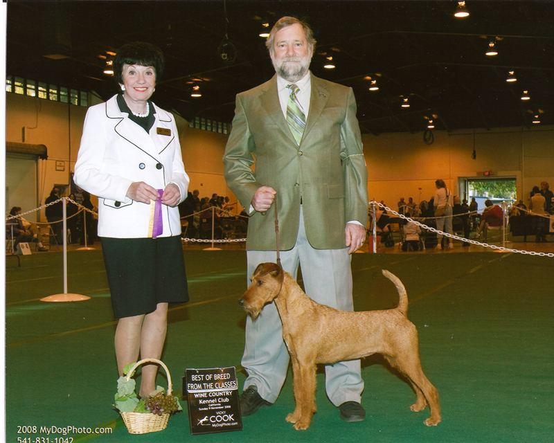 Irish Terrier Mocha, Wine Country Kennel Club, 2008