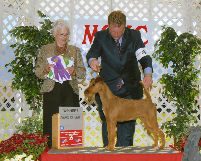 Irish Terrier Mocha, Montgomery County Kennel Club 2006